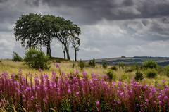 Copt Hill, Houghton, Tyne and Wear (DM Allan) Tags: durham houghton sevensisters sunderland copthill wearside cloudsstormssunsetssunrises