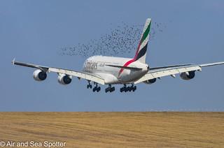 Bird Alert - Airbus A380-800 A6-EDK