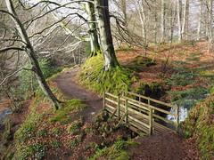 Woodland Path. (Flyingpast) Tags: woods path woodland forest nature spring pretty landscape outdoors sunny angus scotland scottish bridge glenesk glens rural bright leaves visitscotland trail