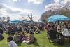 Great social occasion (Adnams) Tags: furnivallgardens theboatraces ghostship beer adnams fanpark