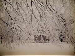 Winter on the Commons (Josiah Johnson Hawes, 1850s) (Nemoleon) Tags: march 2017 eastofthemississippi landscapephotography nationalgallery bostoncommon josiahjohnsonhawes dscn3530 saltedpaperprint