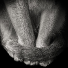 Cat poise (JaniceNZ) Tags: cat tail poise elegance monochrome bnw animal texture