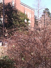 Little bird outside Dobo (parksnunnally) Tags: uncw uncweteal ecology bio366 image2 sp2017 symbiosis commensalism