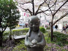 IMGP5696 (digitalbear) Tags: pentax q7 08widezoom 17528mm f374 nakano doori sakura cherry blossom blooming full bloom tokyo japan araiyakushi arai yakushi baishoin