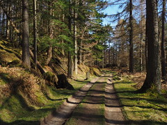 Woodland Track. (Flyingpast) Tags: woods forest trees path tracks nature spring perthshire rural highlands walk sunny outdoors pine pretty sunday