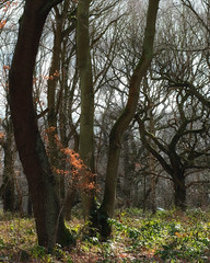 Sherwood forest (*sarah*.) Tags: forest beech twigs sticks trees woodland