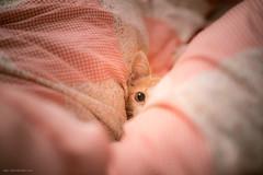 チラッ ・`ω・) (月詠小萌) Tags: 貓 猫 cat ねこ canon ef2870l
