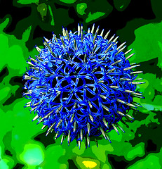 Blue Alium flower (tim constable) Tags: alium flower plant nature english country garden blue mauve delicate stems green sphere spherical ball summer floral creation bristol cityofbristol uk blueoftheheavens blueglobeonion bluegarlic timconstable globe botanical stamen fauna natural