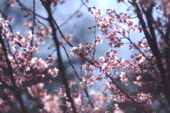 """Springtime in Japan 春 • <a style=""""font-size:0.8em;"""" href=""""http://www.flickr.com/photos/69809940@N08/33419875061/"""" target=""""_blank"""">View on Flickr</a>"""