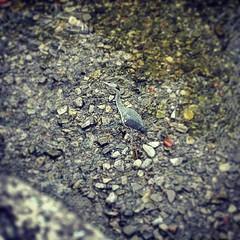 Airone (imma.brunetti) Tags: instagramapp square squareformat iphoneography uploaded:by=instagram xproii airone fiume sassi uccello becco zampe ali mugnone toscana firenze italia acqua