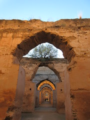 Arches with a tree growing, ruins of royal stables, Heri es-Souani, Meknes, Morocco (Paul McClure DC) Tags: meknes morocco almaghrib jan2017 meknès historic architecture