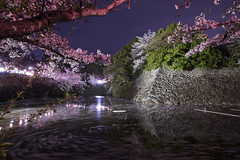 Koriyama Castle Park in Spring (Patrick Vierthaler) Tags: 大和 郡山 郡山城跡 郡山城 大和郡山城跡 さくら 桜 2017 夕方 夜 マジックアワー 奈良 関西 日本 お城 水 池 nara japan kansai japanese castle japanisches schloss koriyama yamato kooriyama park ruins sakura cherry blossoms kirschblüte abend evening long exposure blue hour blaue stunde water reflections reflektionen wasser teich pond