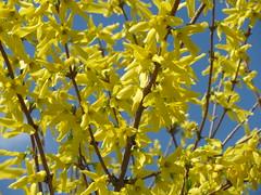 Christ Is Risen! Happy Resurrection Day! (Tanya Mass) Tags: christisrisen happyresurrectionday happyester spring signofspring springblossom