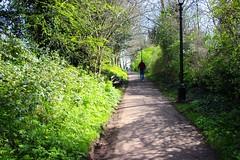 Brandon Hill Park, Bristol (Samantha Tyson) Tags: bristol suspension bridge brandon park hill harbourside harbour sunset clifton dog tower daffodils