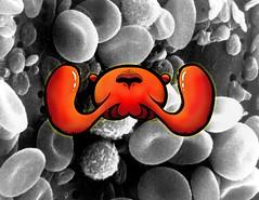 TENTÁCULOS DE FALOPIO. (eRr3De [The Orphans] ORP+) Tags: célula hematíes graffiti calle bacteria ilustración sanguineo