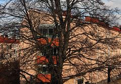 My Favorite Tree (Linnea from Sweden) Tags: favorite tree canon eos 1100d efs 55250mm f456 is ii
