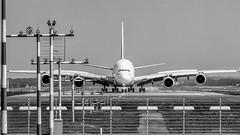 Airbus A380 800 - soeben gelandet. (Werner Thorenz) Tags: a380 emirates airport flughafen airportdüsseldorf düsseldorf wernerthorenz gelandet landing justlanded airbus airbusa380 touchdown uae dubai dus megaairliner plainspotting aircraft thorenz aviation luftfahrt