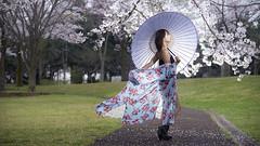 SAKURA (ai3310X) Tags: none carlzeiss ycontax sonnar t2885 桜 ポートレート portraits