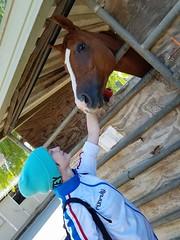 (alexandersterling) Tags: horse stables people animals animal ranchopalosverdes california