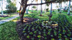 Flower of the Month (Chris C. Crowley- Editing for the next month or so) Tags: flowerofthemonth amespark ormondbeachflorida flowers trees park grass scenic landscape birdbath cherub art