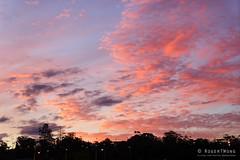 20170404-04-Hobart sunset (Roger T Wong) Tags: 2017 australia cenotaph domain hobart mtwellington rogertwong sel2470z sony2470 sonya7ii sonyalpha7ii sonyfe2470mmf4zaosscarlzeissvariotessart sonyilce7m2 tasmania clouds sky sunset