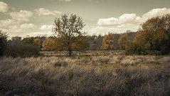 Copper fields (Coisroux) Tags: trees autumns auburn grasses isolated desolate forests treelines landscapes artistic constable paintinglike surreal seasons golden hues coppers bushes overgrown unkept nenevalley peterborough d5500 nikond