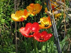 IMG_7120_Fotor01 (Ela's Zeichnungen und Fotografie) Tags: hannover landschaft natur blumen pflanzen äste sonnenlicht schatten