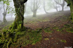 Musgo. (Howard P. Kepa) Tags: paisvasco euskadi bizkaia durango anboto urkiola monte hayas niebla musgo verano julio