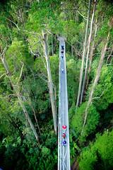 AU021233 (zkhan75) Tags: 12apostles daytrip family fun greatoceanroad otway treetopwalk princetown00 victoria australia