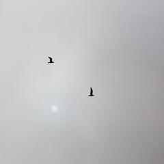 nowhere... (Vladimir Barvinek) Tags: nowhere bird sun fog triangle trinity flight mist morning conditions weather peace blackandwhite square