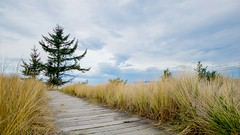 On The Way To The Beach (daynawines) Tags: landscape boardwalk grass clouds tree outdoor outside