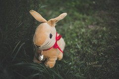 Easter bunny _ week 15/52 (pierfrancescacasadio) Tags: 50mm 🐰 easterbunny bunny aprile2017 coniglio pasqua