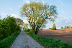Green road. (Azariel01) Tags: 2017 belgique belgium bornival champ field printemps spring route pavée paved road tree arbre green vert
