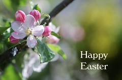 Happy Easter (haberlea) Tags: garden easter happyeaster blossom appleblossom spring flowers pink green white card