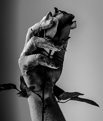 Dead hand (FredrikAndreasson) Tags: hand dead deadhand cracks flower rose nikon tamron art dark darkart beautiful beautifuldead death contrast contrasts model blackandwhite blacknwhite