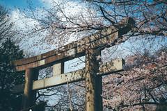 上野公園|東京都 Tokyo (里卡豆) Tags: olympus penf 25mm f12 pro 2512pro 上野公園 東京 tokyo japan 日本 關東 kanto 東京都
