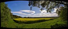 Sunny outlook (Sundornvic) Tags: oilseedrape crops fields yellow green blue sky clouds sun light shining farming farm