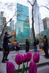 Life is a constant juggling act, especially during Spring in the Big Apple (AndrewDallos) Tags: juggling nyc manhattan bryant park spring