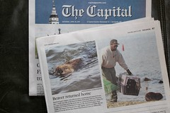 Local News (Piedmont Fossil) Tags: sandypoint state park maryland beaver wildlife newspaper thecapital