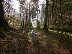The lovely woodlands north of Penpont village, near Thorhill in Dumfries and Galloway (penlea1954) Tags: uk water river landscape scotland woodlands village glen hills southern lovely keir dumfries galloway sanquhar uplands thornhill nith tynron penpont scaur parishe thorhill
