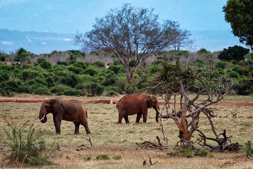 """Tsavo Est (107 di 265) • <a style=""""font-size:0.8em;"""" href=""""http://www.flickr.com/photos/121308622@N02/13995192094/"""" target=""""_blank"""">View on Flickr</a>"""