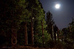 Full Flower Moon over the Totem Poles at Stanley Park ~ Vancouver, BC (Michael Thornquist) Tags: canada vancouver britishcolumbia firstnations pacificnorthwest stanleypark totempoles yvr westcoast