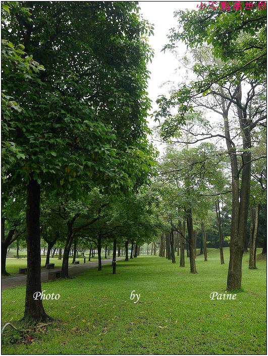 大溪埔頂公園 (15).JPG