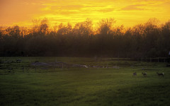 Deer Play (Decaseconds) Tags: sunset newyork rural evening dusk farm hdr canton northcountry