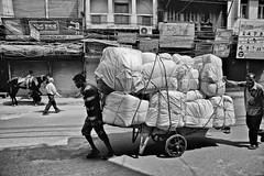 Heavy Transport (hkokko) Tags: horse india wheel work transport hard worker pallet olddelhi ef2470mmf28liiusm