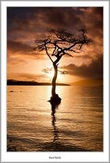 Milarochy Bay in Golden Light (flatfoot471) Tags: winter rural landscape scotland lochlomond stirlingshire millarochybay
