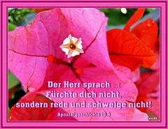 Rede und schweige nicht / speak and do not be silent (Martin Volpert) Tags: flower fleur god faith flor blossoms pflanze kirche blumen bible blomma christianity blume bibbia fiore blte blomst rede virg gemeinde lore biblia bloem blten gott blm iek floro kwiat flos ciuri bijbel kvet kukka cvijet ecclesia flouer glauben christentum blth jesuschristus cvet zieds is ngstlich floare  blome iedas bibelverskarte mavo43 schweige acts189 apostelgeschichte189