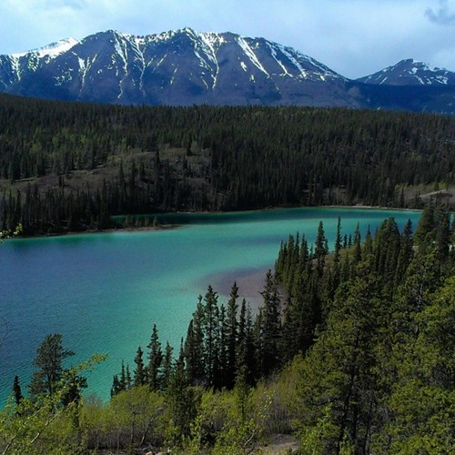 Emerald Lake #yukon The blue-green colour is from the white marl on the lake bed reflecting sunlight