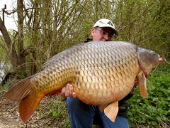 Large Common 2013