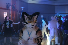IMG_3719 (Tender Paws UK) Tags: paws tender 2014 cfz confuzzled cfz2014